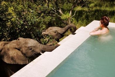 The-Royal-Portfolio-royal-Malewane-Elephants-at-Pool.jpeg